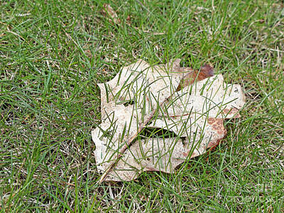 Spring Grass Growing Art Print by Ann Horn