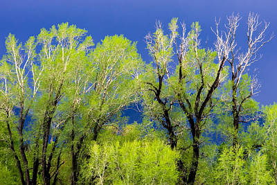 Photograph - Spring Green Before The Storm by Joan Herwig