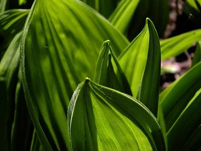 Photograph - Spring Green by Gene Cyr