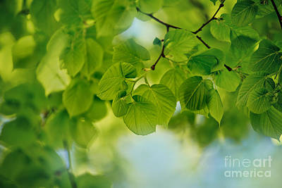 Spring Green Art Print by Nailia Schwarz