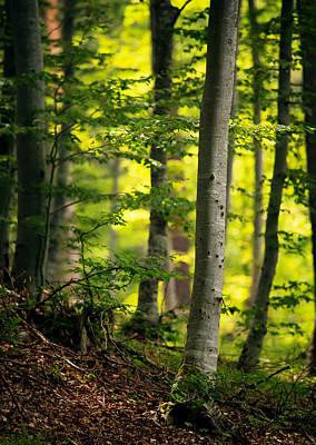 Photograph - Spring Green Vertical Forest  by Svetoslav Sokolov
