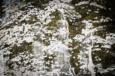 Photograph - Spring Grove 26 by Scott Meyer