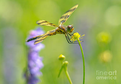 Photograph - Spring Halloween Pennant  by Cheryl Baxter
