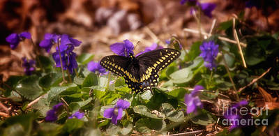 Photograph - Spring Has Arrived by Julie Clements
