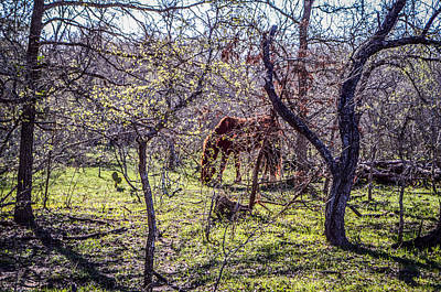 Photograph - Spring Has Sprung by Kelly Kitchens