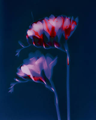 Photograph - Spring Has Sprung by Susan Leake
