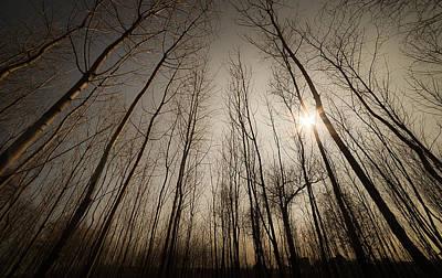 Spring Haze Original by Mihai Ilie