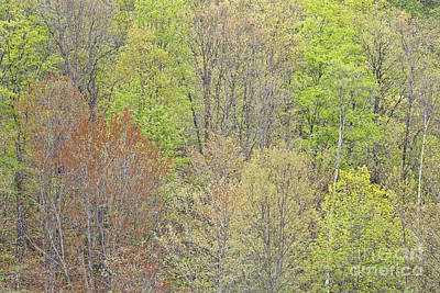 Photograph - Spring Hillside Foliage by Alan L Graham