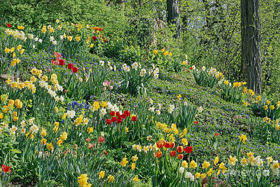Photograph - Spring Hillside Garden by Alan L Graham