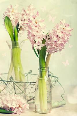 Cut Flowers Photograph - Spring Hyacinths by Amanda Elwell