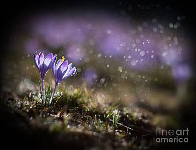 Spring Impression I Art Print by Jaroslaw Blaminsky
