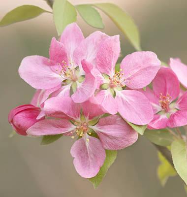 Photograph - Spring Impressions by Kim Hojnacki