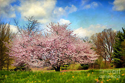 Spring In Kentucky Art Print by Darren Fisher