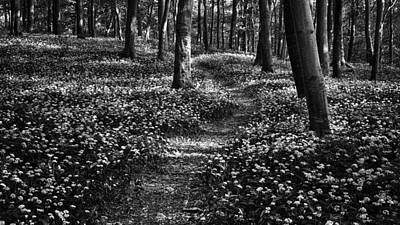 Photograph - Spring in Mount Bakony by Ferenc Farago - Photograph Art
