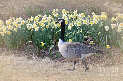 Photograph - Spring In My Strut by Maria Urso