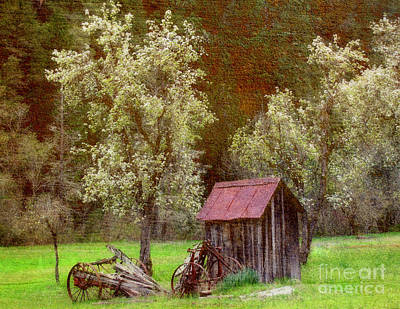 Spring In Old Ranch Art Print