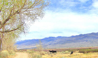 Photograph - Spring In Owens Valley by Marilyn Diaz