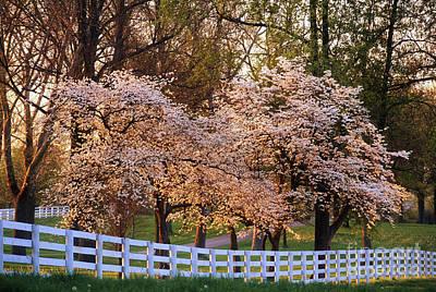 Spring In The Bluegrass - Fs000247 Art Print by Daniel Dempster