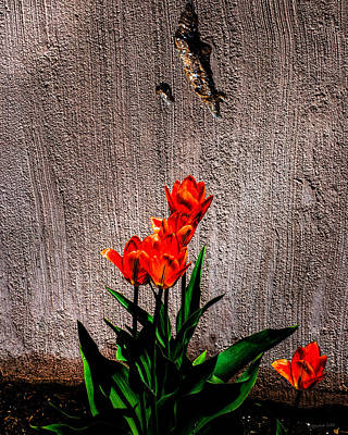 Photograph - Spring In The City by Donna Lee