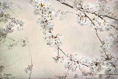 Photograph - Spring In The City by Eena Bo