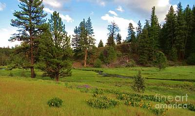 Photograph - Spring In The Ochoco Mountainss by Michele Penner