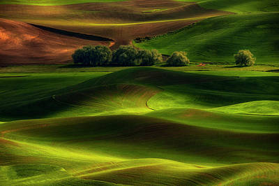 Green Photograph - Spring In The Palouse by Lydia Jacobs
