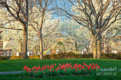 Photograph - Spring In The Park by Susan Cole Kelly