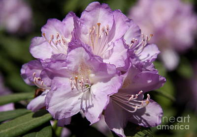 Violett Photograph - Spring In Violett  by Christiane Schulze Art And Photography