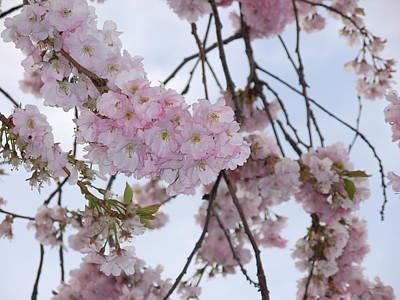 Elizabeth Scott Photograph - Spring In Washington by Elizabeth Scott