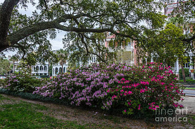 Photograph - Spring In White Point Gardens by Dale Powell