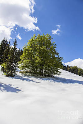 Marvelous Marble Rights Managed Images - Spring In Winter Royalty-Free Image by Fabian Roessler