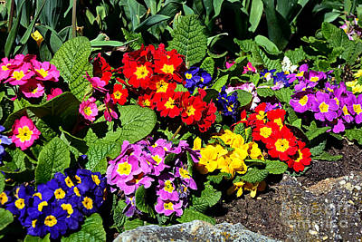 Target Threshold Nature - Spring into Color by Kaye Menner