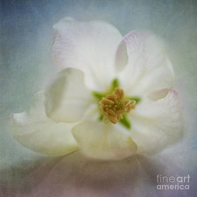 Apple Blossom Photograph - Spring Is Awake by Priska Wettstein