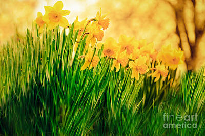 Photograph - Spring Is Calling by Kim Henderson