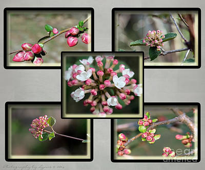 Photograph - Spring Is Here - Gray by Gena Weiser