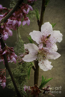 Art Print featuring the photograph Spring Is Here by Lori Mellen-Pagliaro