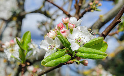 Photograph - Spring Is Here by Tikvah's Hope
