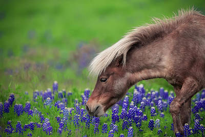 Pony Photograph - Spring Is In The Air... by Michael Zheng