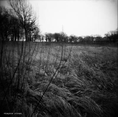 Spring Is Near Holga Photography Art Print