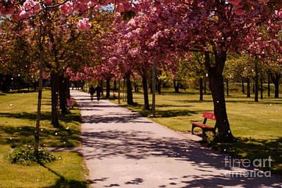 Photograph - Spring by Isusko Goldaraz