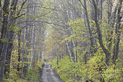Photograph - Spring Lane by Alan L Graham