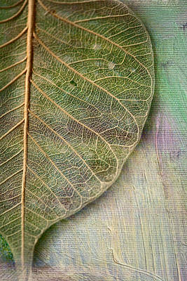 Leaf Photograph - Spring Leaf by Bonnie Bruno