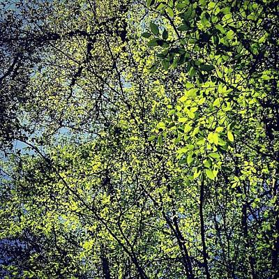 Landscapes Photograph - Spring Leaves  by Nic Squirrell