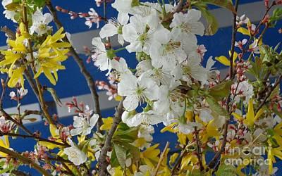 Spring Life In Still-life Art Print