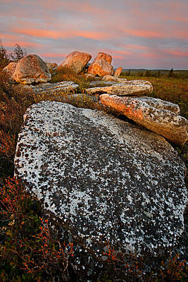 Photograph - Spring Light - Dolly Sods by Bernard Chen