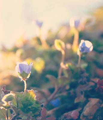 Print featuring the photograph Spring Light And Wildflowers by Candice Trimble