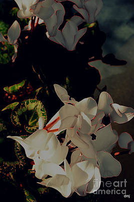 Photograph - Spring Lit by Diane montana Jansson
