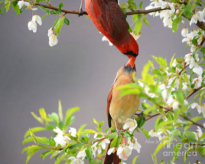 Photograph - Cardinal Spring Love by Nava Thompson