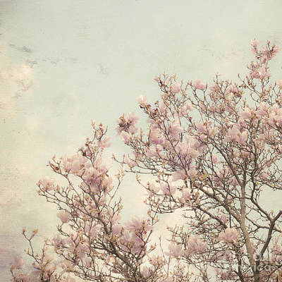 Spring Magnolia Art Print by Diane Miller