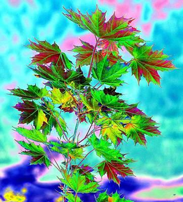 Digital Art - Spring Maple Leaf Design by Will Borden